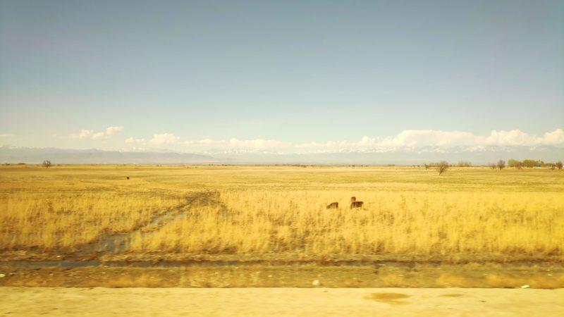 カザフスタンの小麦畑