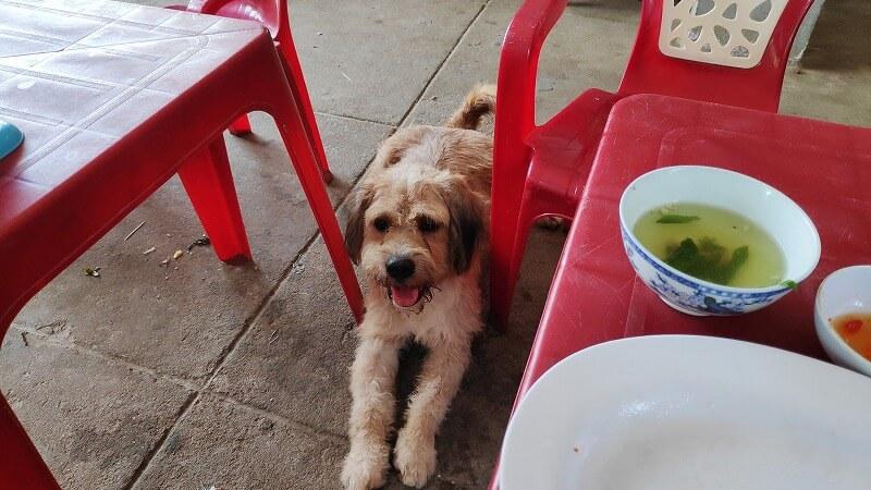 ローカルレストランにいる犬